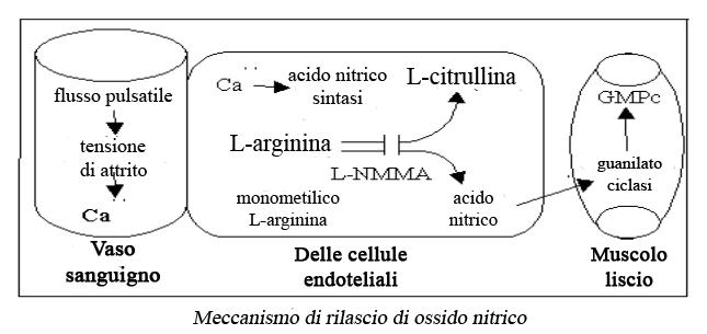 Mecanismo del Oxido Nitrico en italiano 1
