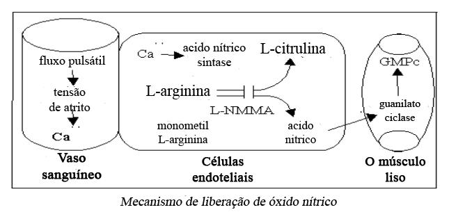 Mecanismos Acido nitrico 1