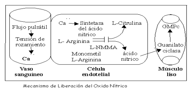 Oxido nitrico 1