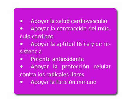 Rendimiento fitness: acción conjunta CoQ10 y L-carnitina