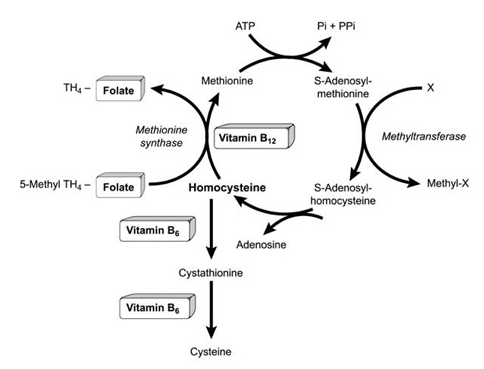 Vitamina Fitness 4º parte| Vitamina B12