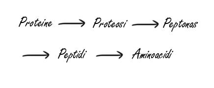 Proteine fitness idrolizzate: conosci i loro benefici 1