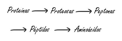 Mecanismo de hidrolización de proteina fitness