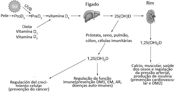 imagen 1 vitamina D (portugués)