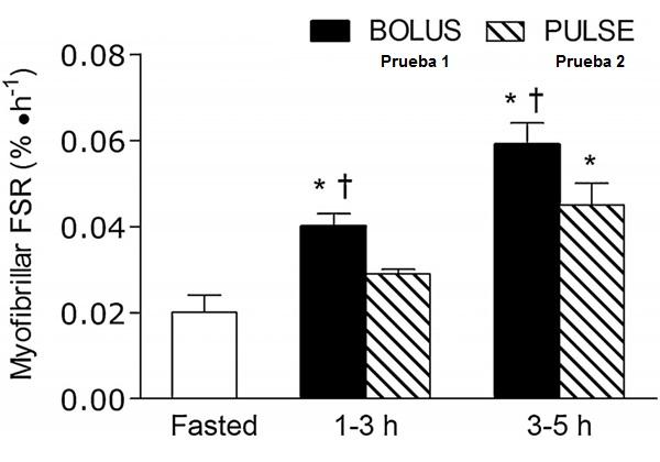 La absorción de proteínas y la síntesis proteica